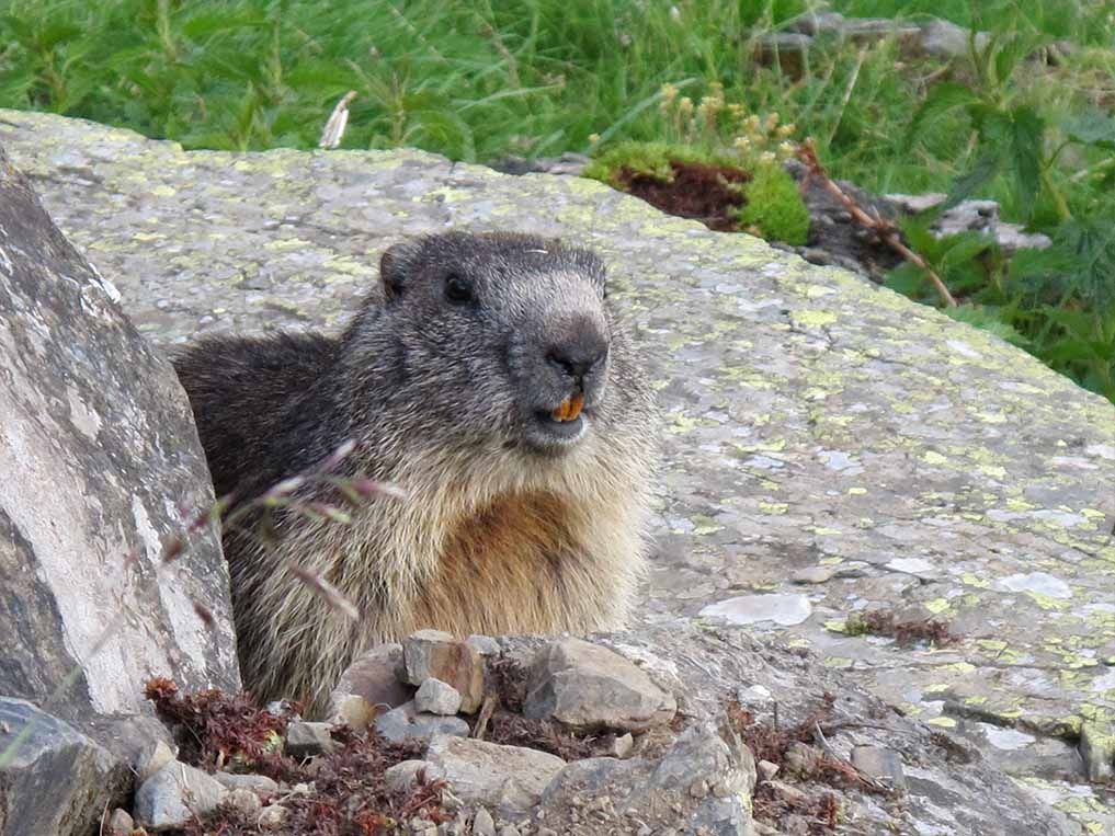 Sejour Liberte Itinerance Bivouac Slow Rando Beaufortain 2020 Marmotte
