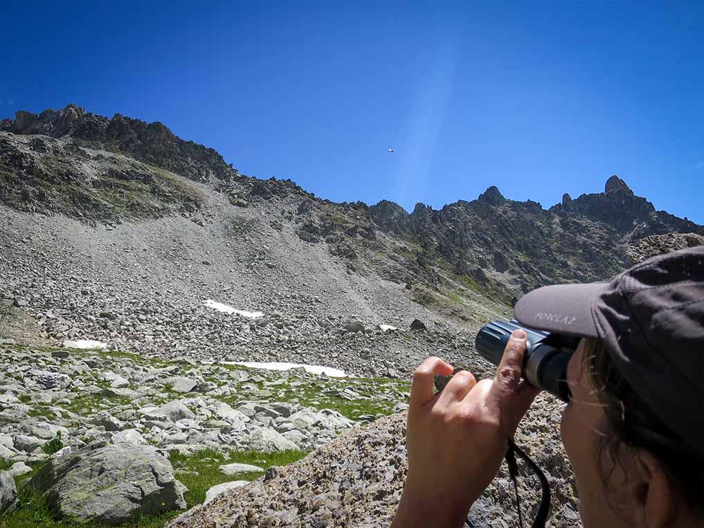Sejour Liberte Itinerance Bivouac Slow Rando Beaufortain 2020 Observation Bouquetins