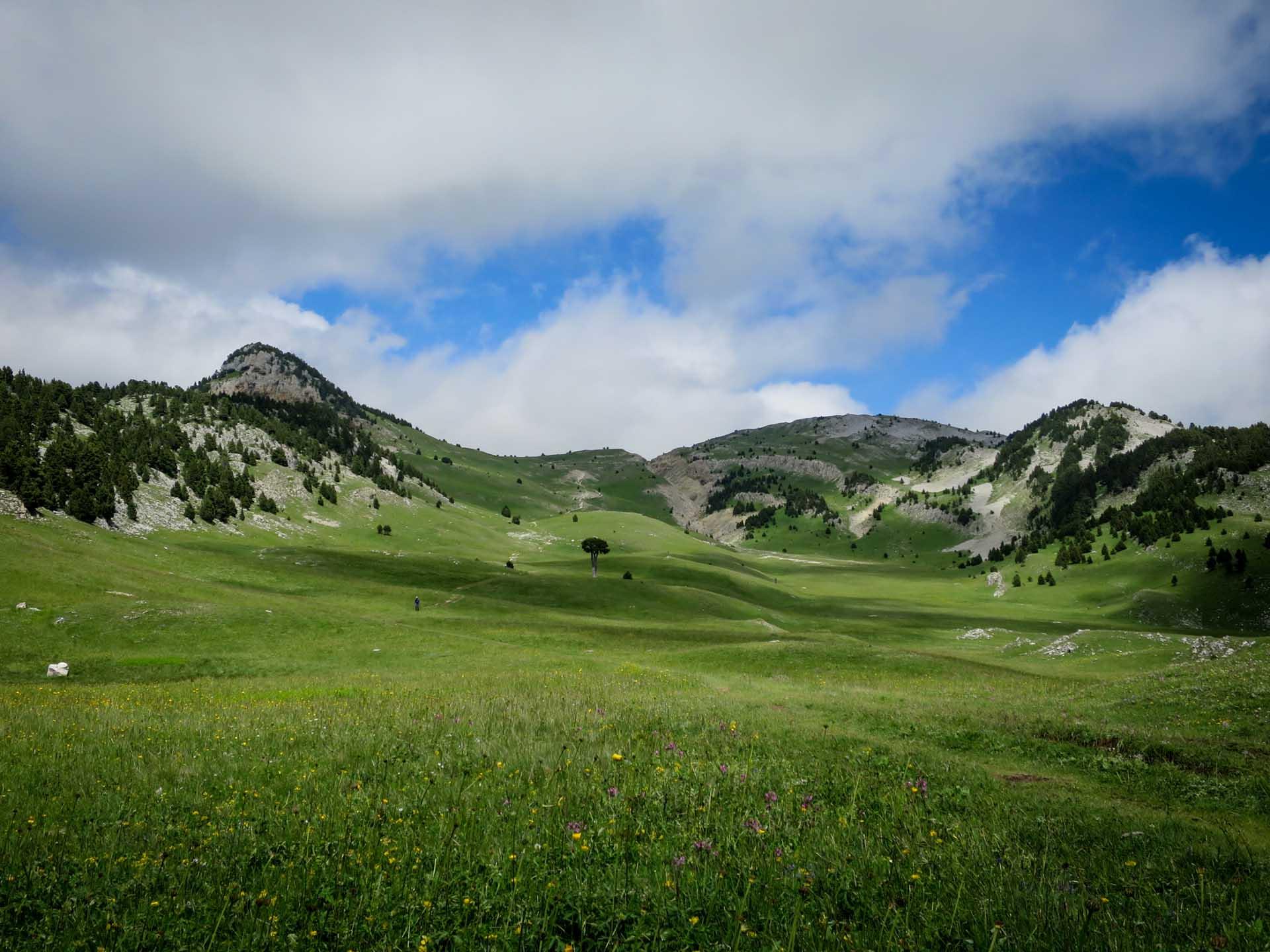 Arbre Taille Hauts Plateaux Vercors Plaine Quirlie Slow Rando