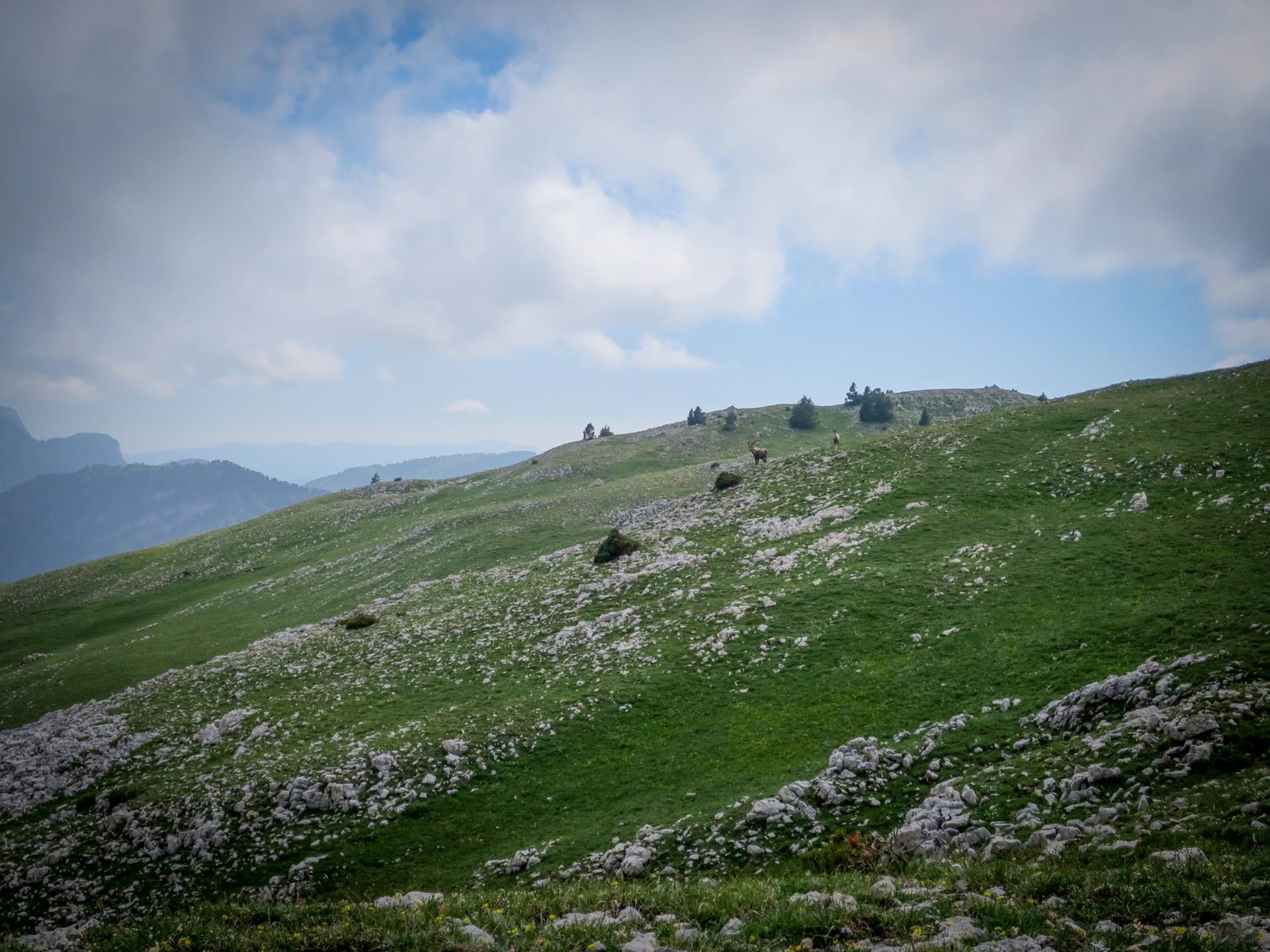Bouquetin Hauts Plateaux Vercors Itinerance Sejour Trek Tente Slow Rando