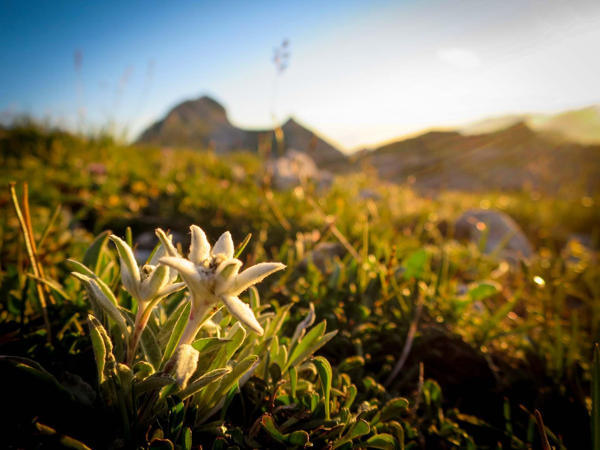 Edelweiss Grand Veymont Hauts Plateaux Vercors Itinerance Sejour Trek Tente Slow Rando