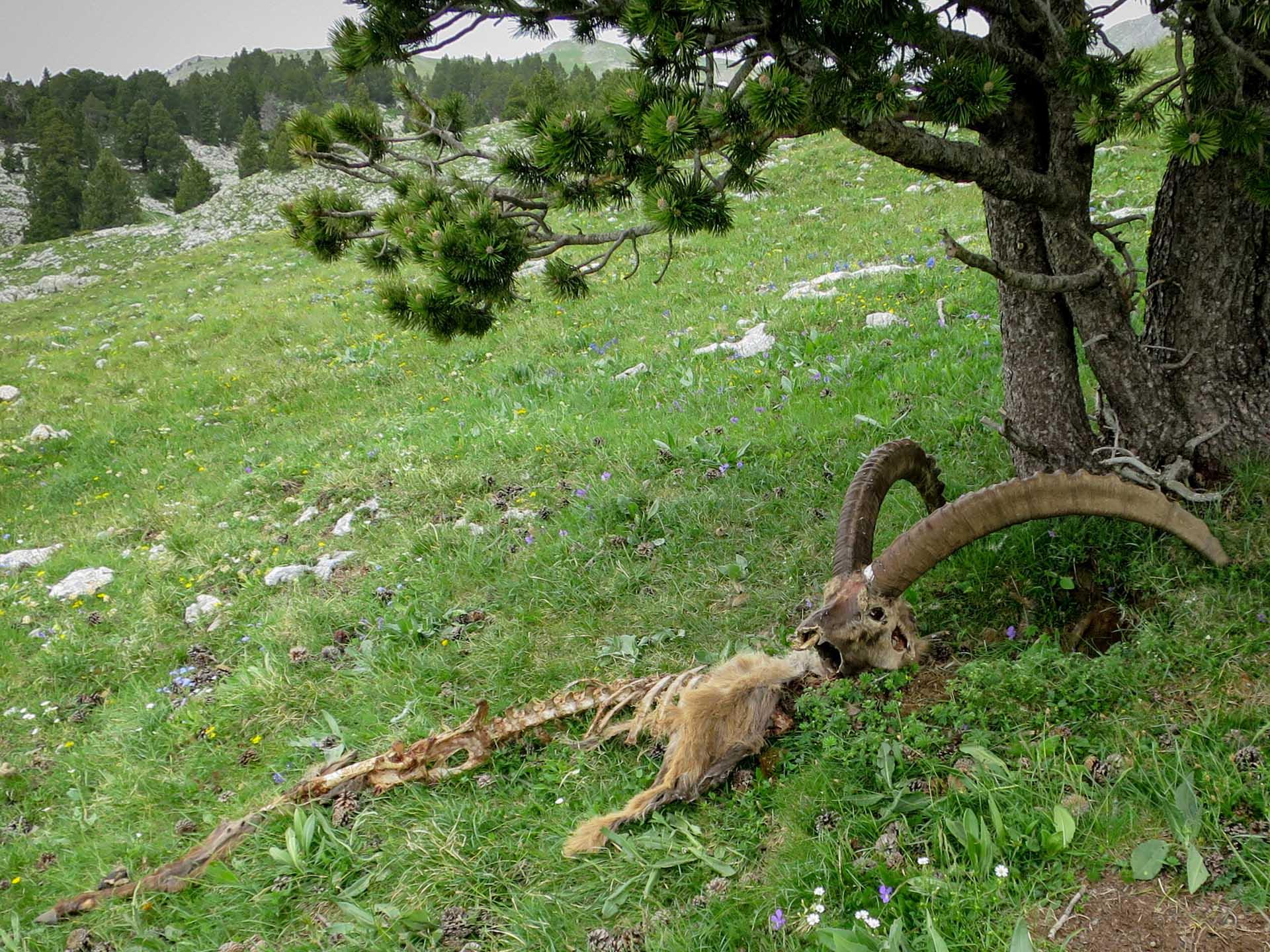 Slow Rando Reserve Hauts Plateaux Vercors Mont Aiguille Rochers Parquet Bouquetin