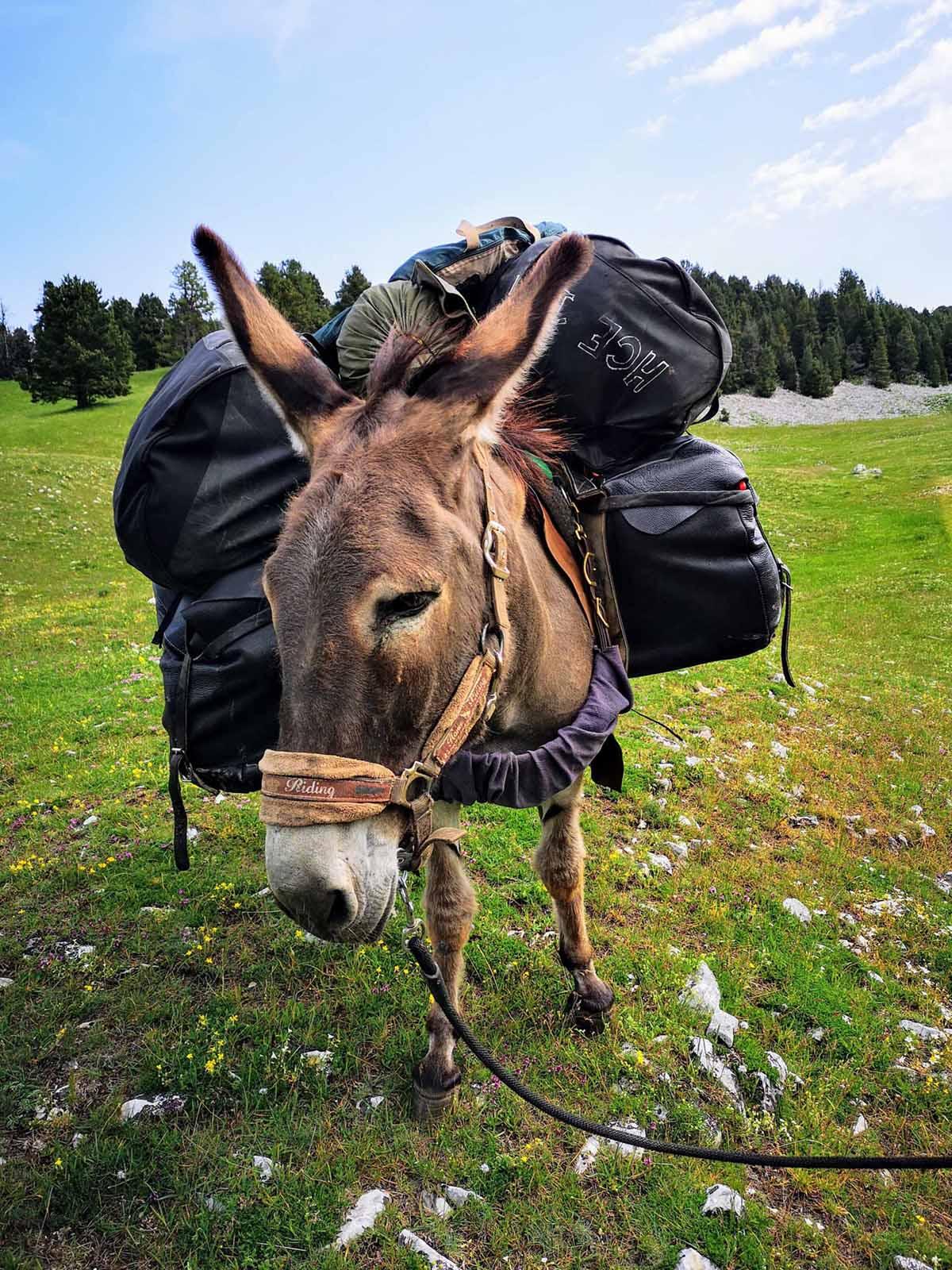 Slow Rando Reserve Hauts Plateaux Vercors Mule Ane Handicapevasion