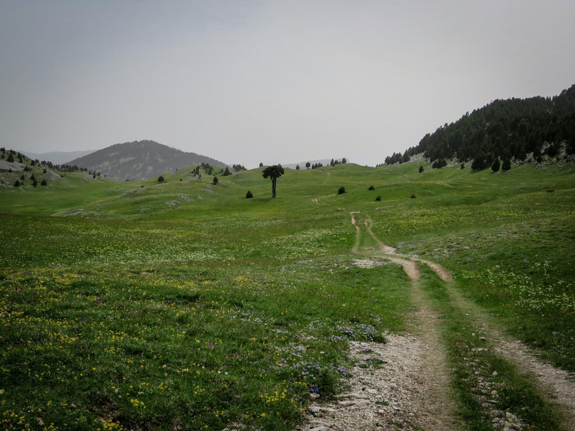 Slow Rando Reserve Hauts Plateaux Vercors Plaine Quirlie Arbre Taille