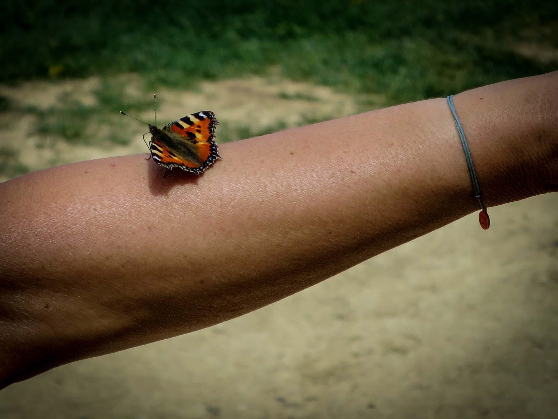 Slow Rando Papillon Hauts Plateaux Vercors