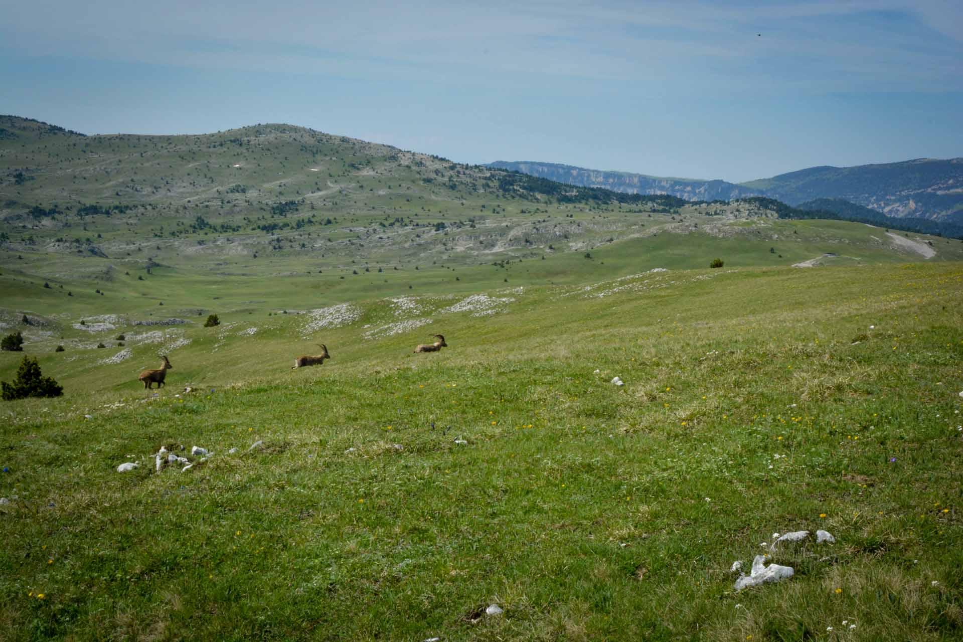 Slow Rando Sejour Liberte Decouverte Bivouac Hauts Plateaux Vercors Mont Aiguille Bouquetins