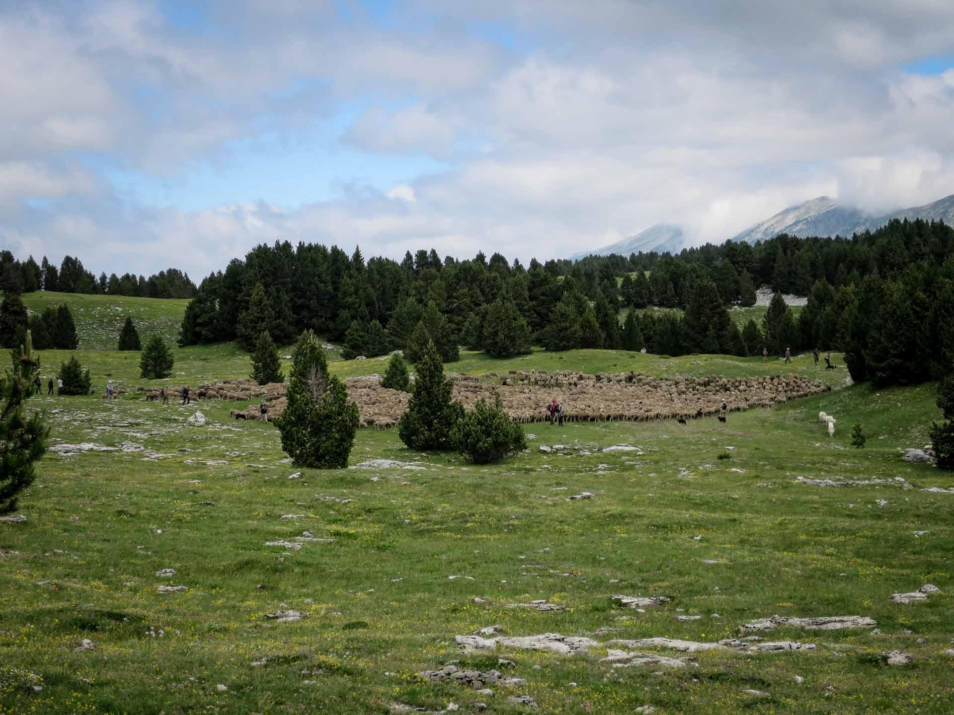 Transumance Berger Hauts Plateaux Vercors Grand Veymont Slow Rando